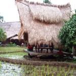 Sapu Lidi, Makan di Sawah